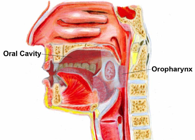 humán papillomavírus oropharyngealis rák)