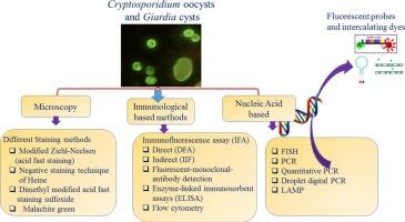 Giardia cryptosporidium screen