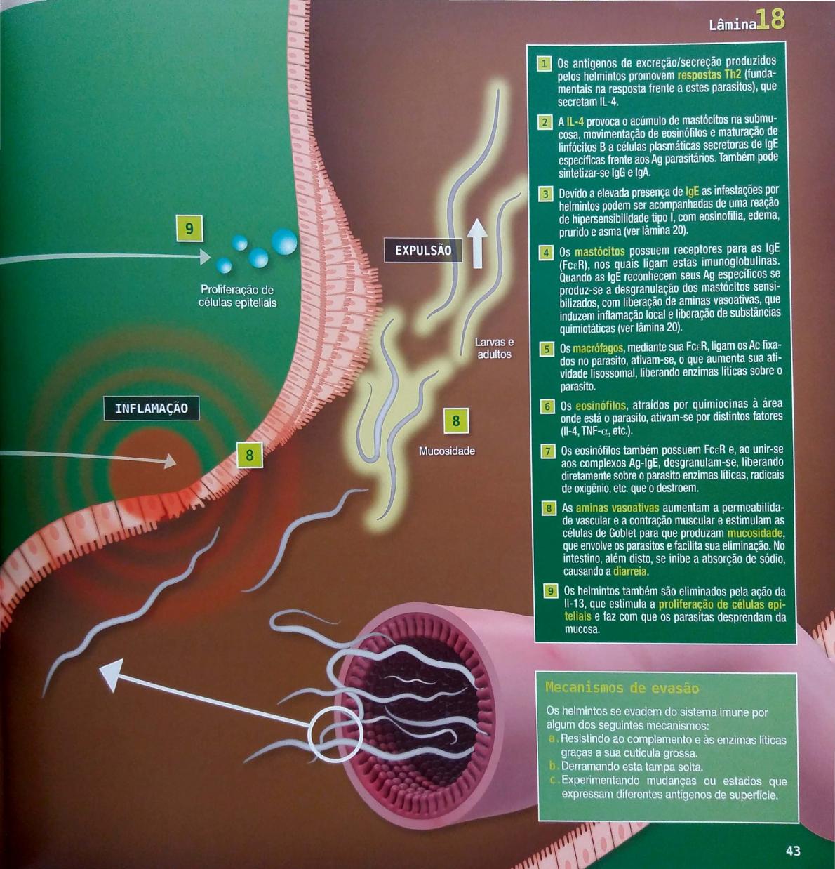 a helminthiasis fertőző vagy sem)