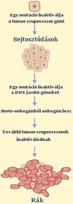 hashártya rák ismeretlen elsődleges