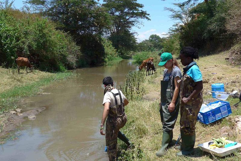 schistosomiasis víz magas kockázatú típusú humán papillomavírus hpv kimutatása
