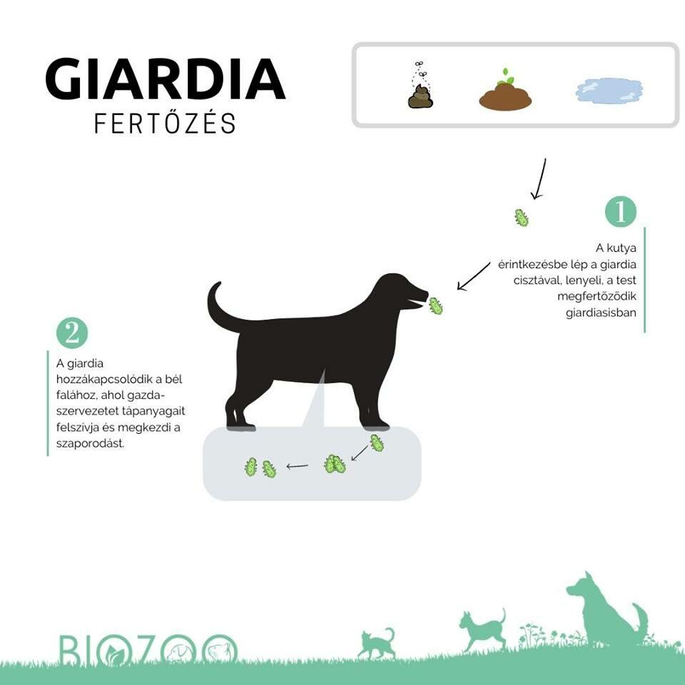 giardia természetes kezelés