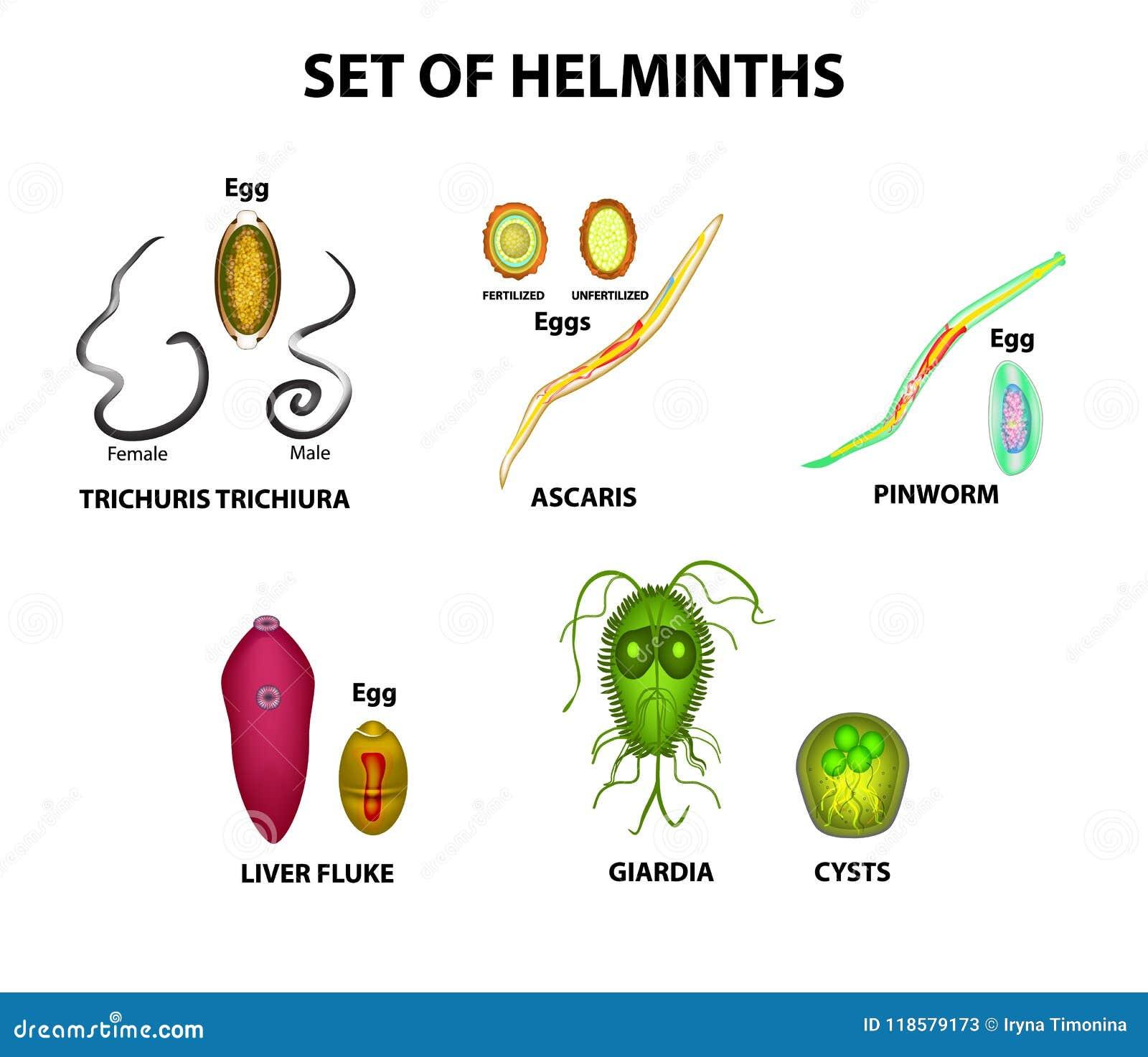a helminthiasis fertőző vagy sem
