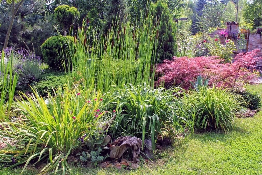 ember kerti kezelés