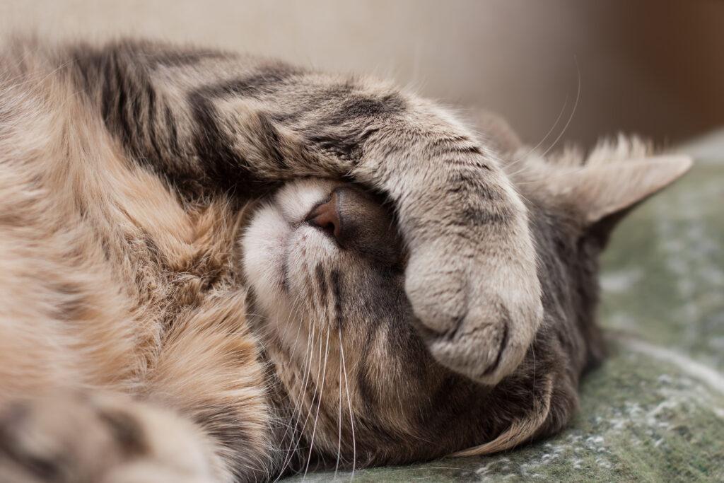 giardien katze erbrechen
