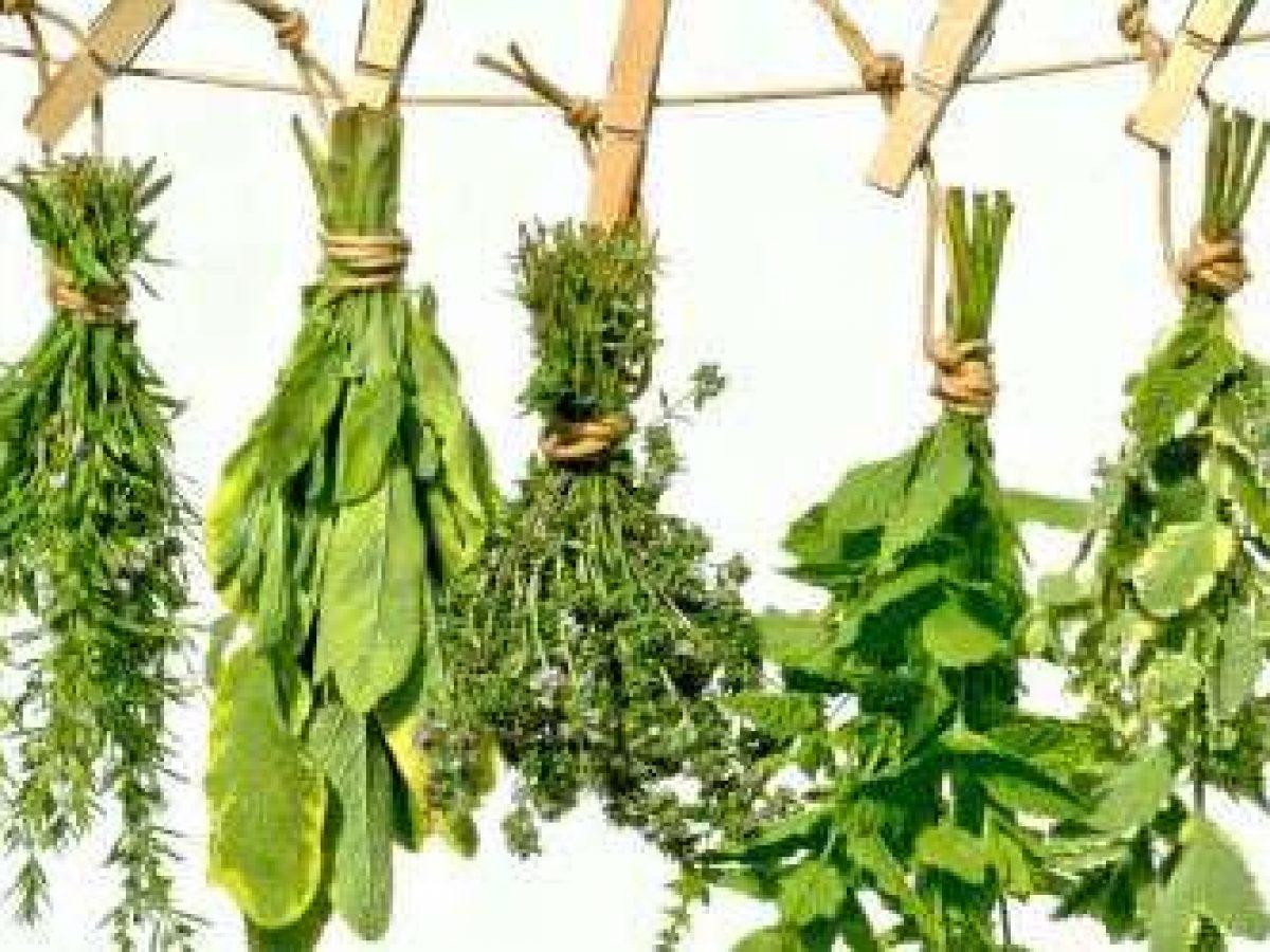 hpv vírus tedavisi bitkisel