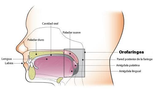 Növekedés az amygdala (papilloma) okai, tünetei és megelőzése