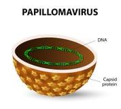hpv vírus vrouwen