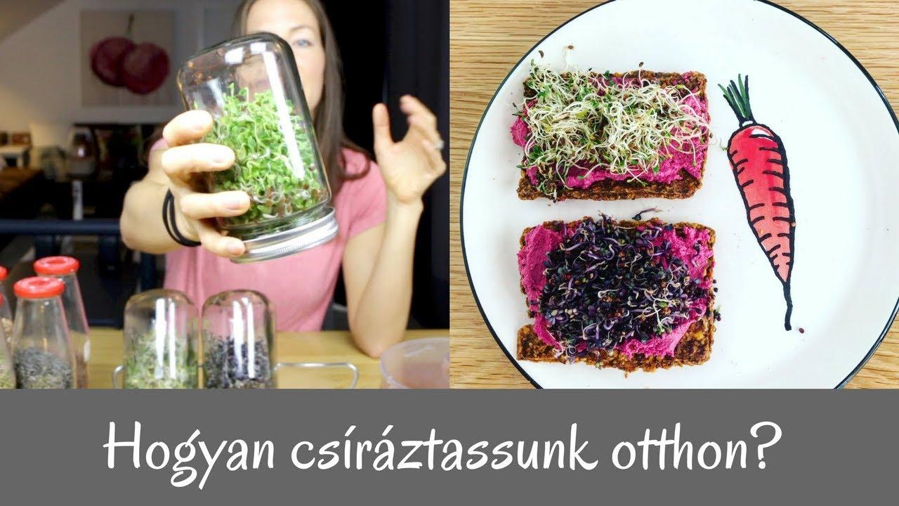 platyhelmints csíra réteggel)