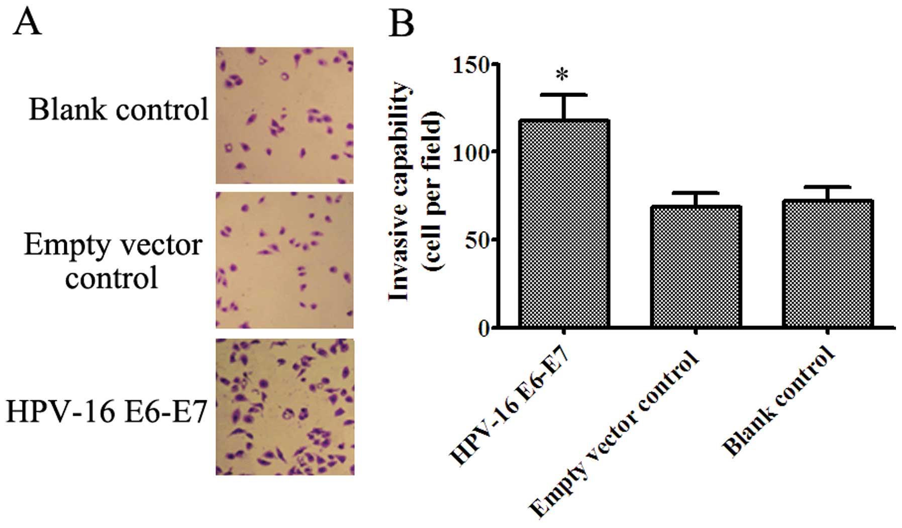 papilloma in vitro