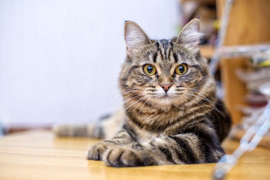 giardien katze erbrechen)