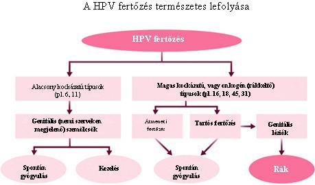 méhnyakrák és hpv vírus)