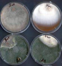 a baktériumok biológiai védekezése