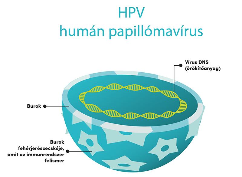 humán papilloma vírus újszülöttekben)