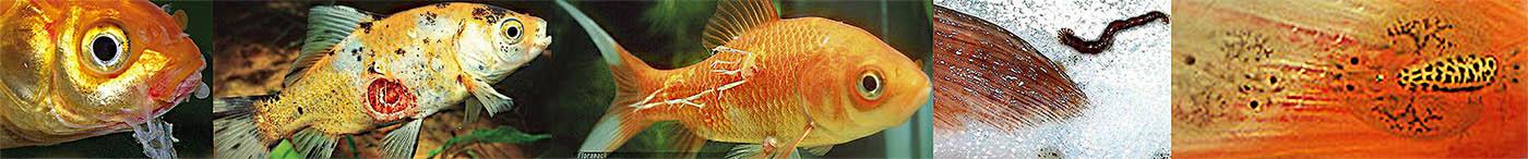 halak parazitákkal történő forgalmazása