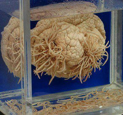 Pinworms egyéves gyermekkezelésben