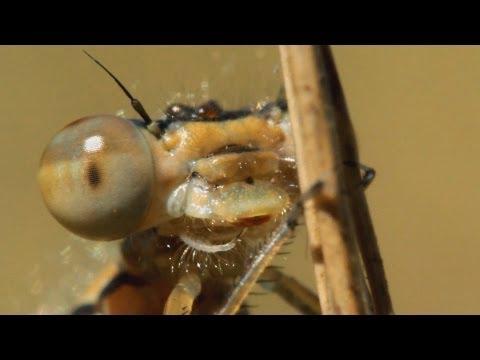 Mikro makró paraziták,