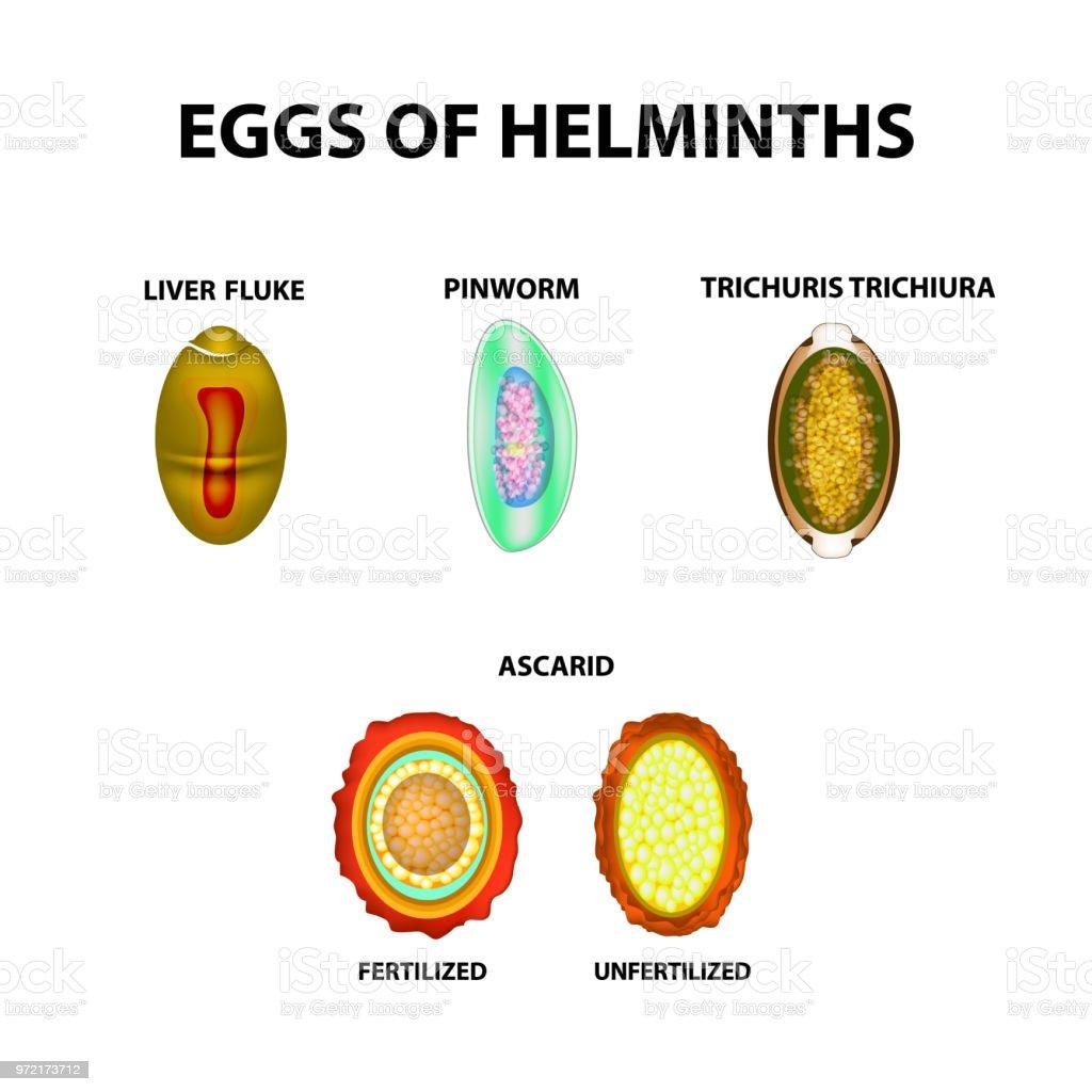 a helminthiasis ellenőrzése