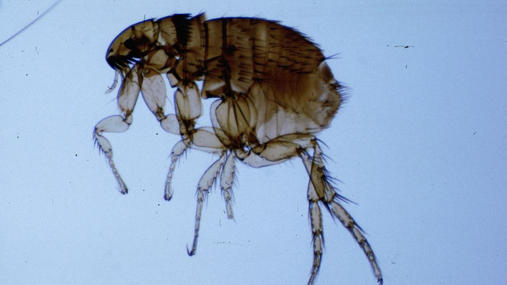 Megbetegítenek a bennünk élő paraziták