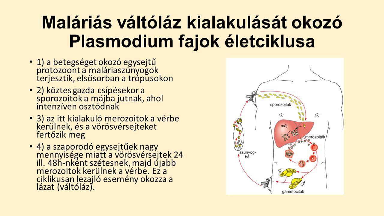 Protozoan paraziták az emberi vérben Immunológia
