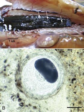 neorickettsia helminthoeca parazita)
