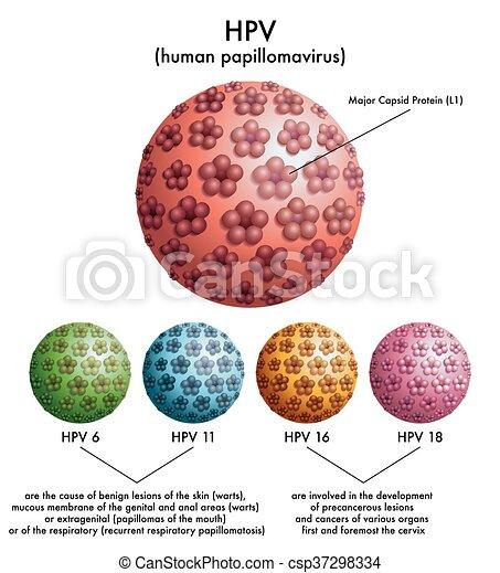 HPV humán papilloma vírus)