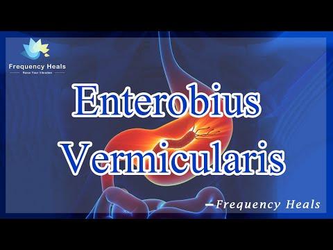 Enterobiasis pinworm tünetek kezelése. Pinworms kezelése: tünetek és gyógyszerek