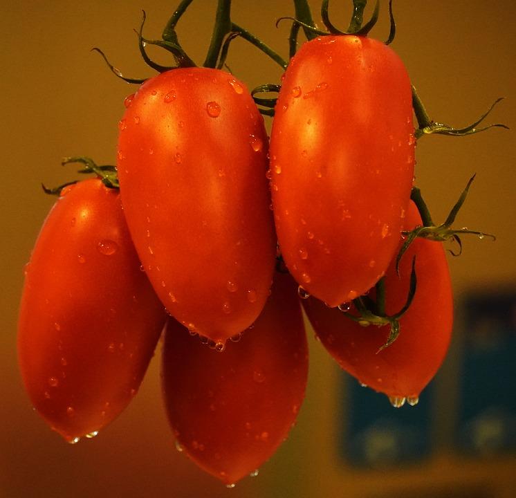 Vörös paradicsom. Papilloma nitrogénnel történő cauterizálás után
