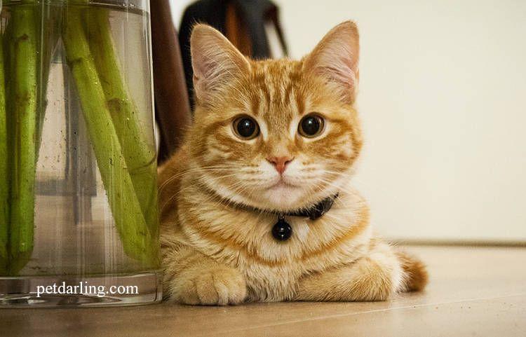 giardia gatos féreg belül