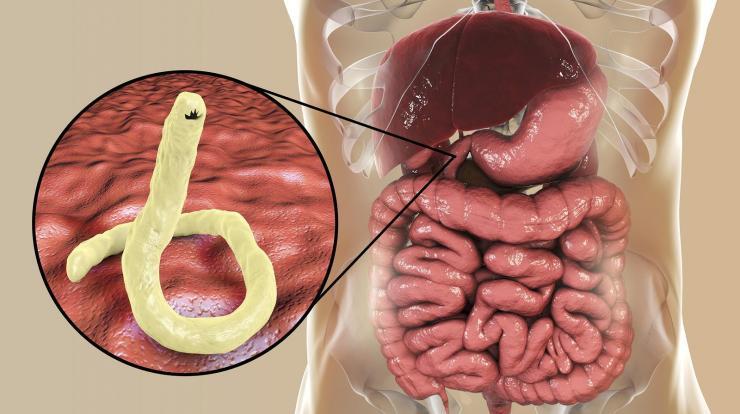 a parazita kód átadja a tüneteket