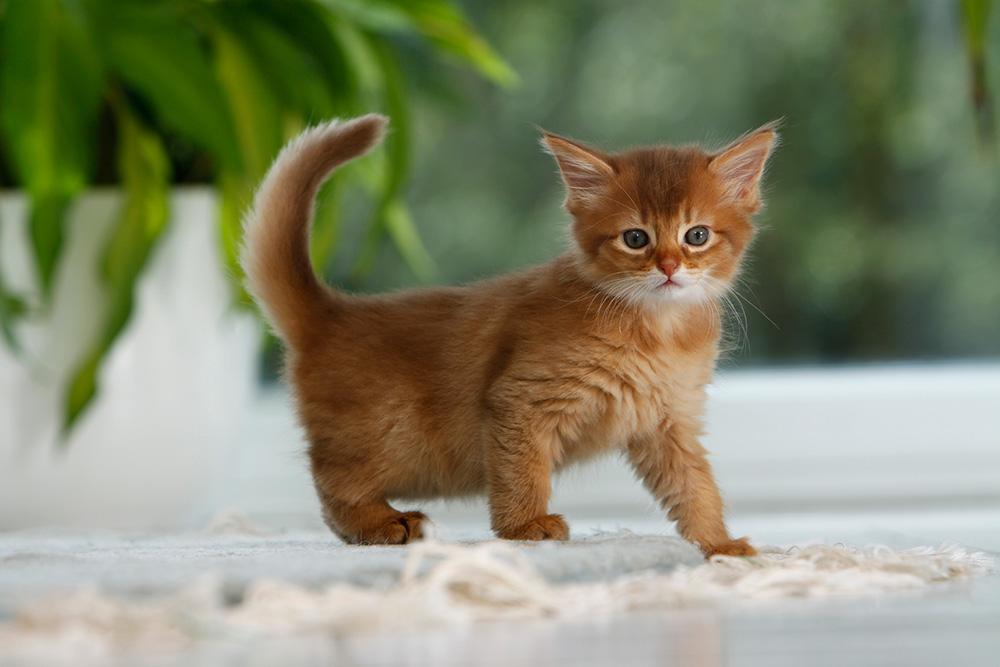 woher kommen giardien bei katzen)