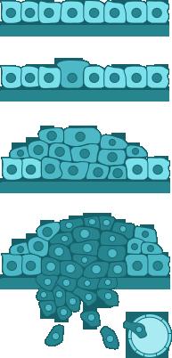 a 16. típusú humán papillomavírus variánsai