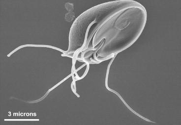 vastagbél méregtelenítés fogyás céljából éves pinworms