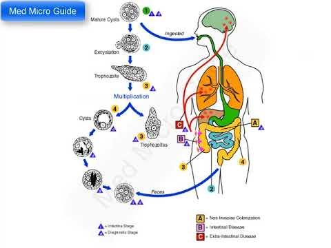 a giardiasis fertőzés megelőzése)
