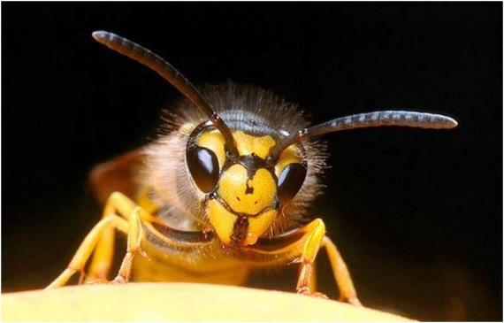 a méh papillómái okozzák és kezelik