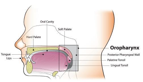 oropharyngealis humán papillomavírus hpv fertőzés)