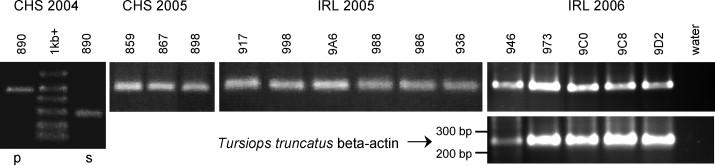 A papilloma vírus törülközőkkel terjed