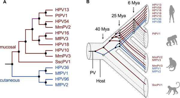 papillomavírus hpv 18)