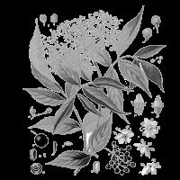 bél méregtelenítő gyógynövények)