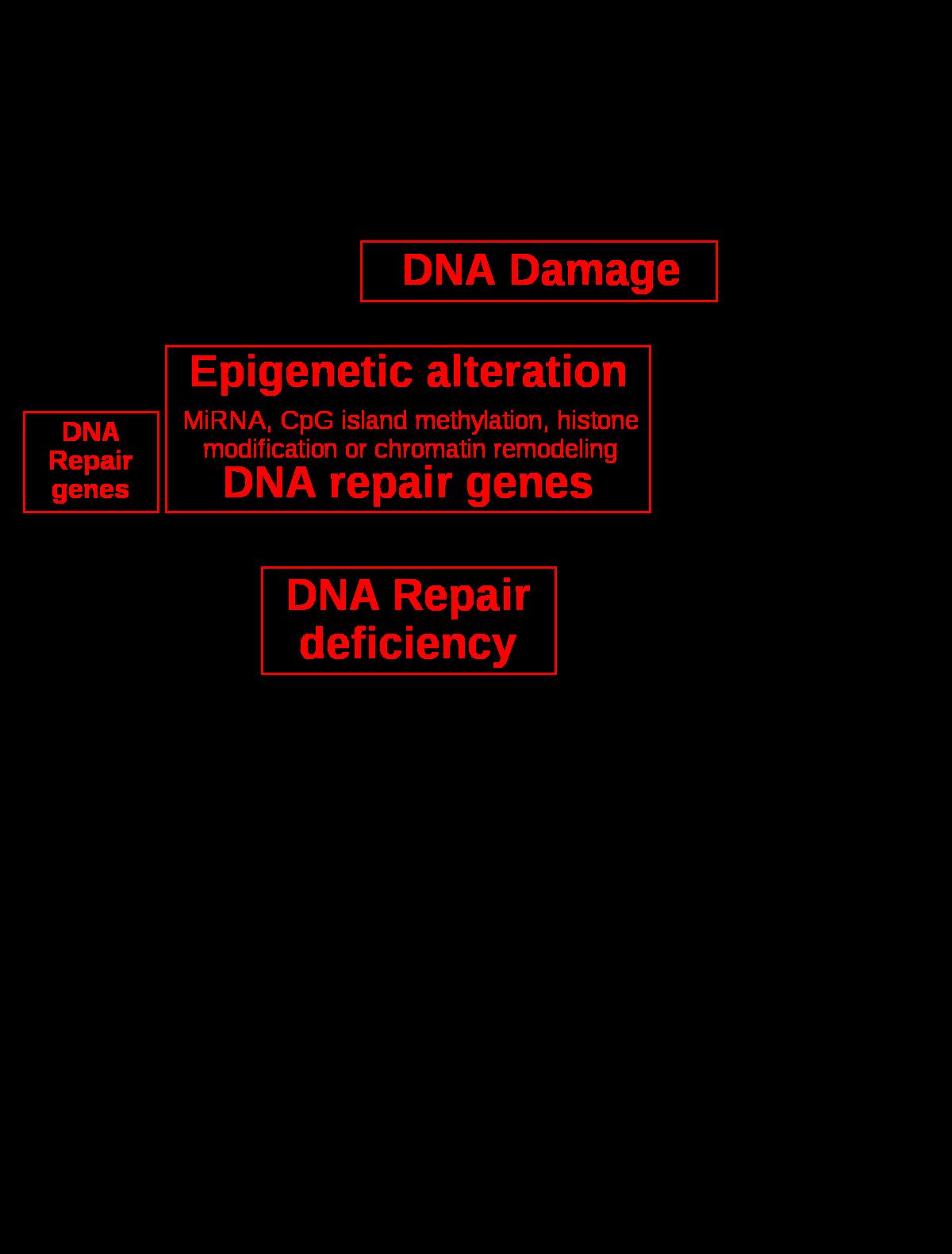 endometrium genetikai rákja