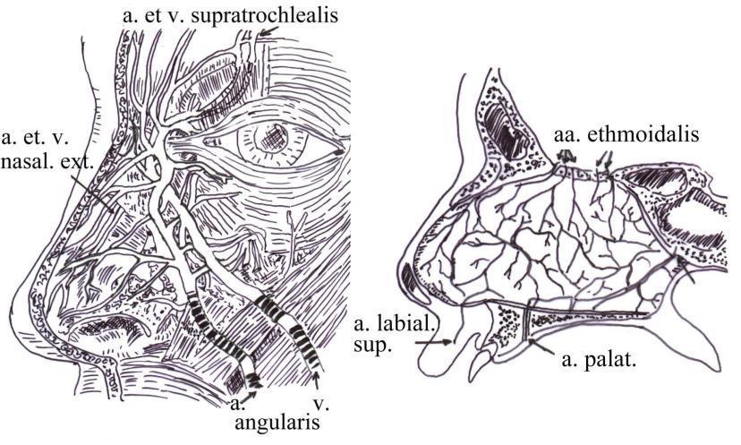 A vulva és a hüvely gyulladásai, a condyloma, a Bartholini-mirigy gyulladása - midwife