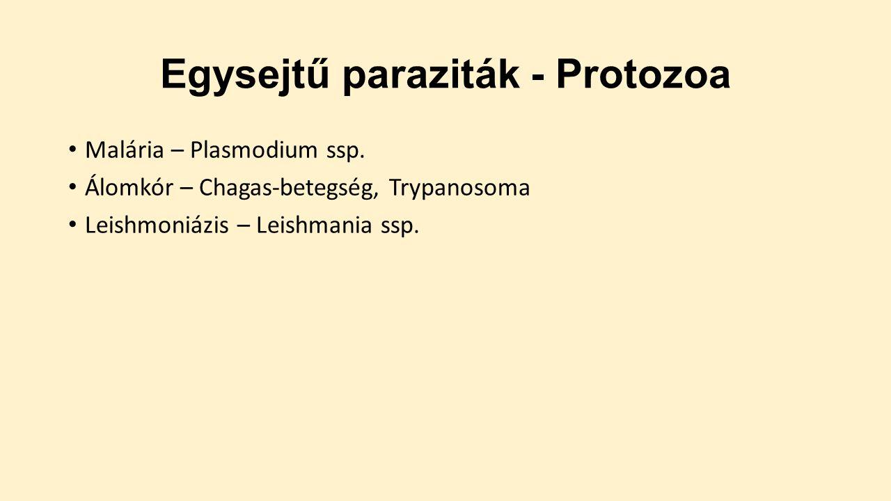 Típusú protozoan paraziták