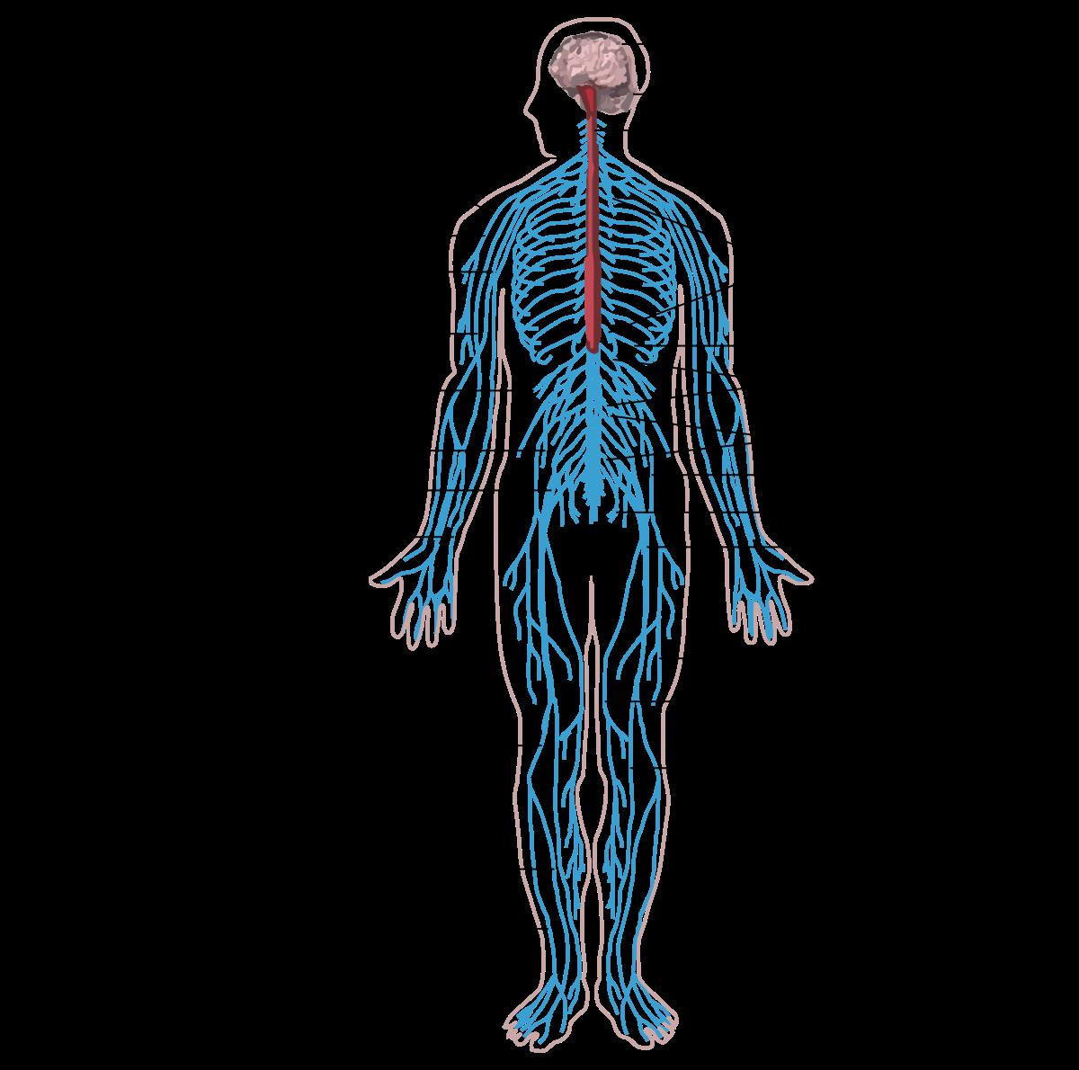 Az emberi test parazita elleni megelőzése