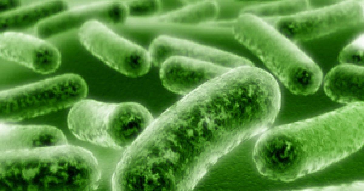 emésztőrendszeri baktériumok