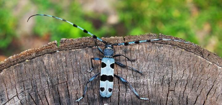 endemikus a rovarok számára)