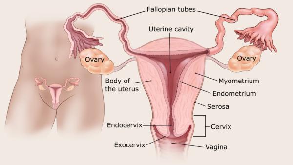 endometrium rák diagnózis)