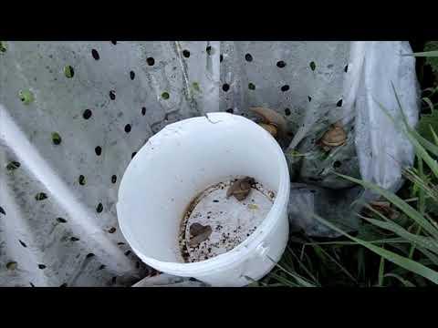Mikro makró paraziták. Malária – Wikipédia