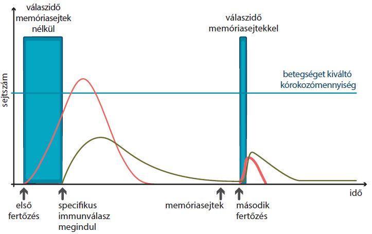 helmintás makrofág fertőzés)