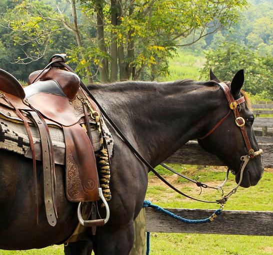 a papillomatosis kezelése lovakon)