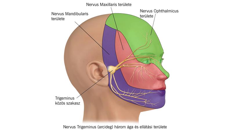 Helminták emberi tünetek kezelése - Helminták gyógyszeres kezelés emberben